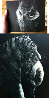 Scratchboards by TamberElla