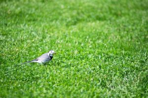 Alone in the green by Mandarancio