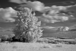 infrared by hlaurah