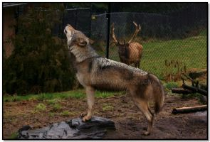 Stress Defined by LoneWolfPhotography