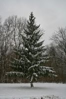 Winter trees - 3 by Seductive-Stock