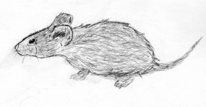 Ugly mouse sketch. by SoSpian