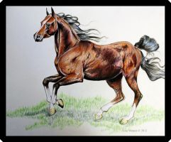 Frolicking Horse by lwatson74