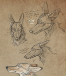 Lost and Found Concepts by Canis-ferox