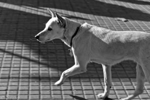 Doggy walker by anahuac
