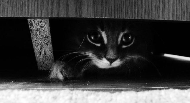 hide and seek by SaCOTY