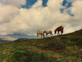 Wild horses by edelweiss26