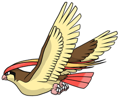 Pidgeot by Hogia