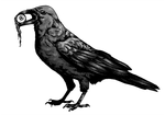 Crow by April-Lily