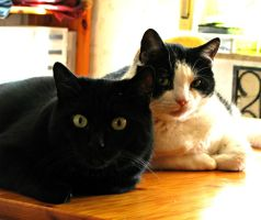 Peace for Ponder and Greebo by CatsWire