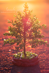 Pine by beads-poet