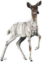 Piebald Doe by ShadiKSilence