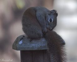 Some Privacy Please by Brian-B-Photography