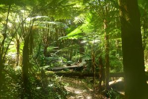Fern Gully by PattyJansen