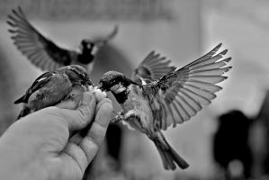 I'm missing my birds by Nile-Paparazzi