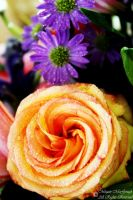 Peach Rose and Purple Flowers by McGough-Photography