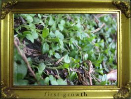 first growth by NEME5IS