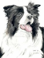 Border Collie by RamonaQ