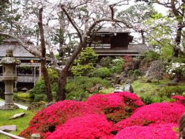 Japanese Tea Garden Again by shara-ralphie