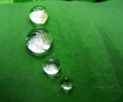drops 0 by victor23081981