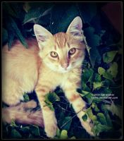Tabby in Weeds by Karl-B