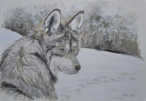 wolf on the trail by acrylicwildlife