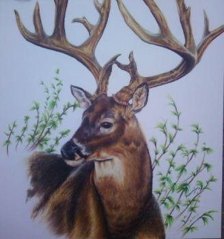 Commission 2 Uncle Tom's Deer by so-long-lonesome