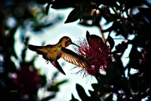 Hummingbird by Sleepius