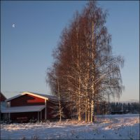 Birches at the edge of the village by NikolaiMalykh