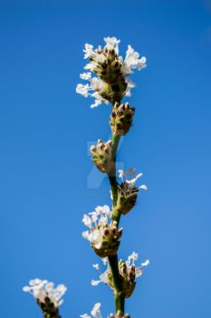 Flowers towering against the sky. by cesarpadilla