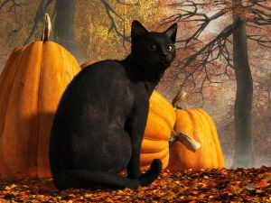 Black Cat At Halloween by deskridge