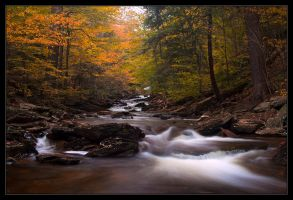 A Fall Symphony by IngoSchobert