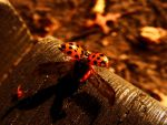 wings of ladybug by rockmylife