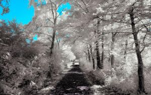 Infrared Trees - pt. III by myINQI
