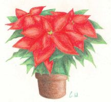 Poinsettia by angstypoet