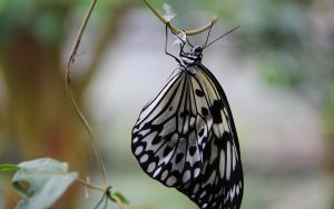 Butterfly hanging around by Dinjai