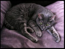 Photo of Neena by Candy-Janney