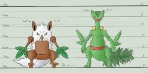 Height: Shiftry and Sceptile by LuckyNeko13
