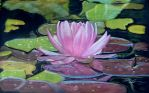 Water lily in pastel by Abaez40