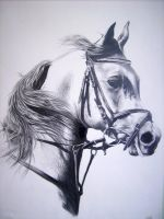 horse with pencil by Russian87