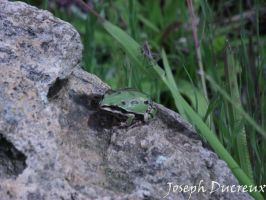Frog by Jos-Duc