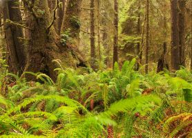 Temperate Rain Forest by madrush08