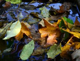 Leaves in the Water by coffeenoir