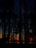 Trees Watch the Sunset too by blasphemy35