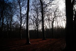 Forest I by UlfStubbe