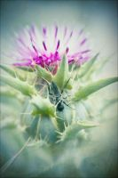 Thistle And Fly by JillAuville