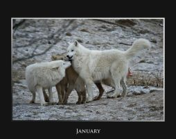 January by deadwolf140407
