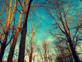 Surrounded by Trees by Michies-Photographyy