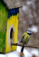 blue tit III by Nanook94