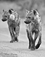 Looking for trouble... by MorkelErasmus